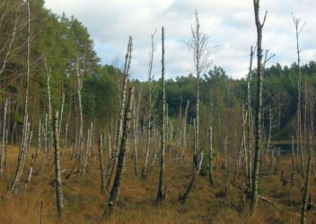 Mój wiosenny spacer po lesie – wyniki konkursu
