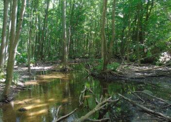 Napisali o lesie – fragmenty nagrodzonych prac